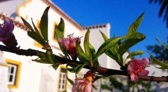 12 Bed Villa for sale in Alentejo, Portugal